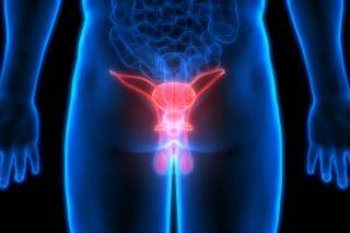 Prostaat & Testikels