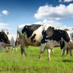 Warum Gras-gefütterte Gelatine in Ihrer Ernährung nicht fehlen darf!
