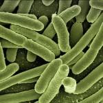 Het Darm-Microbioom: Sleutel tot Gezondheid – Deel 1