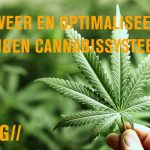 Activeer en optimaliseer je eigen cannabissysteem