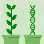 Uw postcode belangrijker dan uw genetische code?